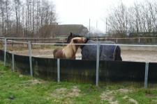 paarden-in-bak