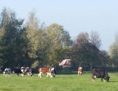 De melkveehouderij